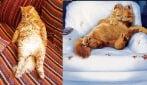 Il gatto che imita Garfield alla perfezione