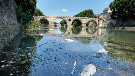 Roma, l'imponente moria di pesci nel fiume Tevere