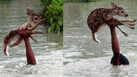 Il cerbiatto rimasto intrappolato rischia di annegare nel fiume: un ragazzino si tuffa e lo salva