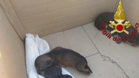 Gettano cuccioli appena nati in un cassonetto, Vigili del Fuoco li salvano