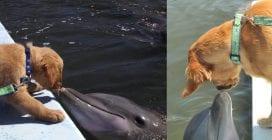 La tenera e duratura amicizia tra il delfino e il cane: quando si vedono si baciano