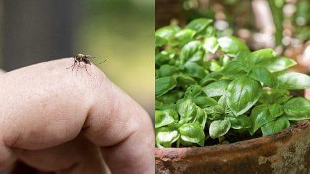 Rimedi contro le zanzare: 5 piante per tenerle lontane