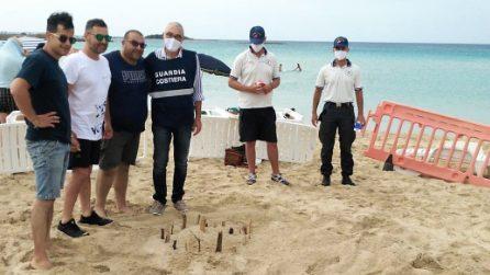 Tartaruga Caretta caretta nidifica tra ombrelloni a Porto Cesareo