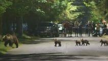 Abruzzo, mamma orsa a passeggio con i suoi 4 cuccioli