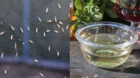 Come tenere lontani gli insetti dalla tua cucina