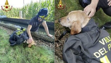 Cane scivola in un canale, il salvataggio dei vigili del fuoco