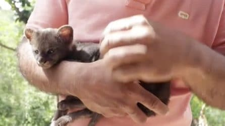 Trova un cucciolo abbandonato e lo porta a casa credendo sia un gattino: in realtà è un puma