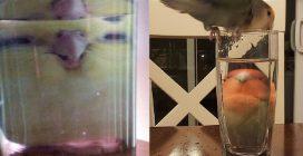 I pappagallini nel bicchiere: le strane e divertenti immagini