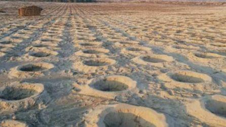 Piantano miliardi di alberi in una zona quasi desertica: in un anno cambia tutto