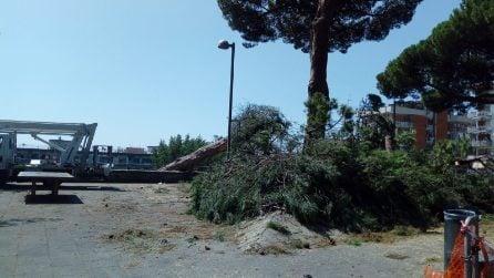 Vomero, il Comune abbatte i pini secolari di via Fontana dopo il crollo di un albero