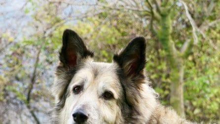 La morte di Nuvola, il cane di Benedetta Rossi