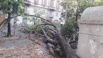 Torino, bomba d'acqua sulla città: alberi crollati in strada