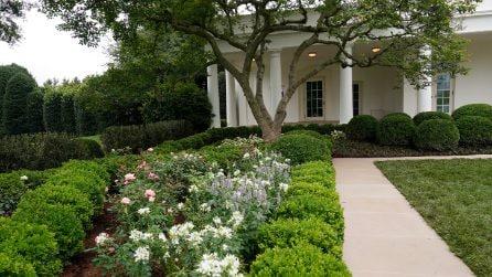 Il nuovo Garden Rose della Casa Bianca restaurato da Melania Trump