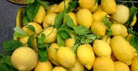 How to check a lemon and choose the right one