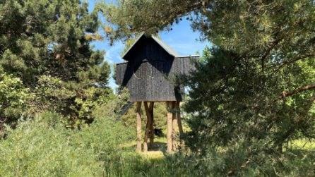 La casa da tè che sembra una casa sull'albero