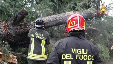 Maltempo a Rozzano, grosso albero abbattuto dal vento: vigili del fuoco al lavoro