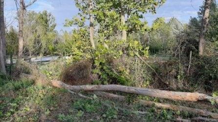 Decine di alberi e rami caduti a Roma per forti raffiche di vento