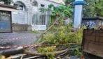 Napoli, alberi crollati al Vomero per il maltempo