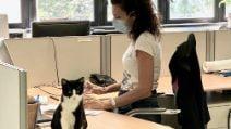 """Rozzano, il Comune ospita due gattini negli uffici: """"Loro compito farsi accarezzare"""""""