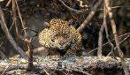 Brasile, il Pantanal in fiamme da oltre 2 mesi tra siccità e incendi dolosi