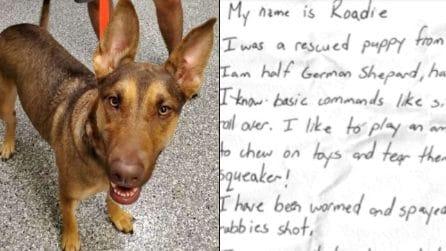 Trovano un cane con un messaggio al collare: quello che c'è scritto è commovente