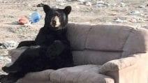 Vede un orso seduto su un divano con le zampe incrociate: ferma l'auto per fare delle foto