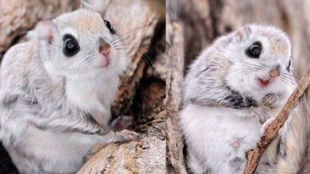 Come Bianca e Bernie: questi scoiattoli sono tra gli animali più teneri al mondo