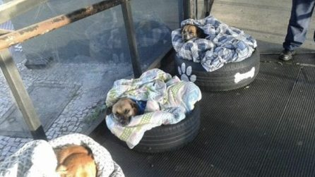 I cani hanno bisogno di un posto caldo: la stazione degli autobus resta aperta per accoglierli