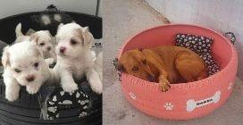 Riciclo perfetto: trasforma vecchi pneumatici in cuccette per cani