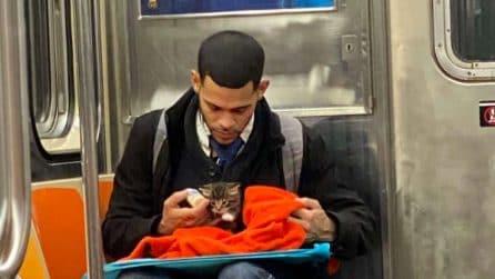 Trova un gattino abbandonato fuori la metropolitana: lo sfama e se ne prende cura