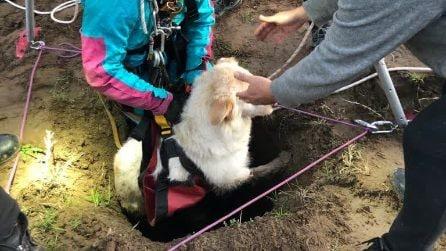Riserva dell'Insugherata, il salvataggio dei vigili del fuoco che recuperano un cane da un pozzo