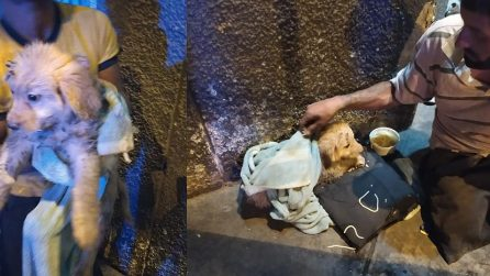 Cucciolo abbandonato davanti ai suoi occhi: il senzatetto lo adotta e se ne prende cura