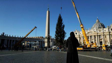 Natale 2020 a Piazza San Pietro: è arrivato l'abete rosso dalla Slovenia
