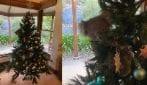 Famiglia trova un adorabile koala sul suo albero di Natale