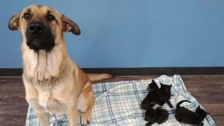 Cane randagio raggomitolato al freddo: stava proteggendo dei gattini orfani