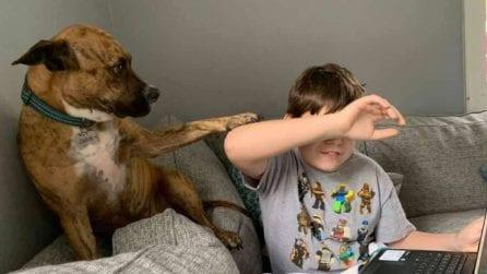 Bambino ha lezione su Zoom: il cane prova in tutti i modi a distrarlo per poter giocare con lui