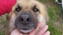 La storia di Hope, la cagnolina legata e chiusa in un sacco dell'immondizia salvata dai volontari