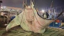Manta di 450 chili trovata nel porticciolo di Palermo
