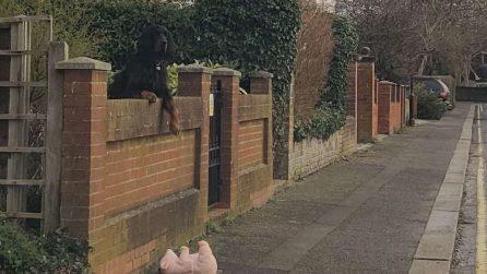 Il cane ha perso il suo amico di peluche: una sconosciuta però lo aiuta a ritrovare la felicità