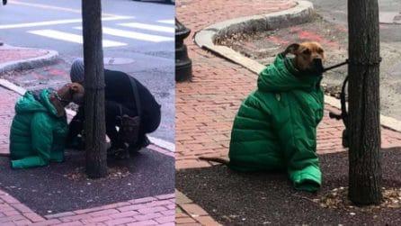 Il cane è legato all'albero: la donna lo copre con un cappotto per proteggerlo dal freddo