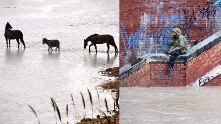 Maltempo Roma, il Tevere si ingrossa: cavalli in fuga