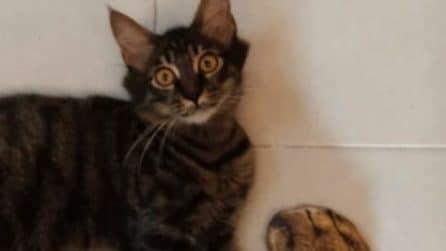 """La reazione """"shock"""" del gatto quando vede i nuovi calzini del padrone di casa"""