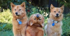 """Il cane che si mette """"a testa in giù"""" quando gli scattano una foto"""
