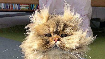 Barnaby, il gatto che sembra sempre si sia appena svegliato