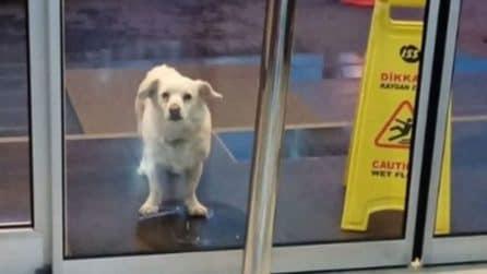 La fedeltà e l'amore del cagnolino che aspetta per 6 giorni che il padrone esca dall'ospedale