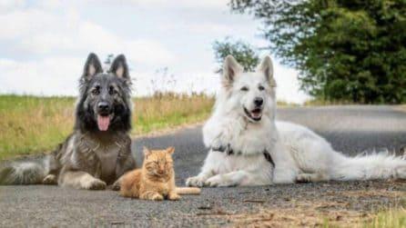 Salva un gatto in fin di vita e lo adotta: i suoi due cani lo proteggono e nasce un legame fortissimo