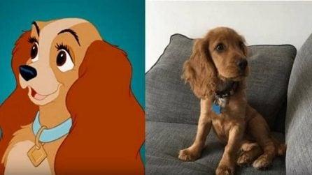 I cani dei cartoni animati nella realtà: una tenera carrellata