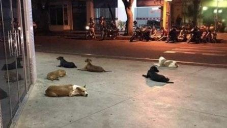 Senzatetto ricoverato: i cani di cui si prendeva cura lo aspettano fuori l'ospedale
