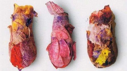 Sembrano dei gioielli, sono in realtà dei nidi di petali fatti da una particolarissima ape
