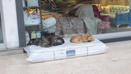 Il proprietario di un negozio mette fuori un materasso per dare un riparo ai cani in strada